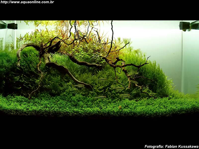 nano plantado de 40l de fabian kussakawa aquarismo